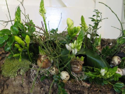 Voorjaar Groen wit