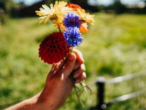 plukboeket-verse-bloemen-pluktuin-esbeek